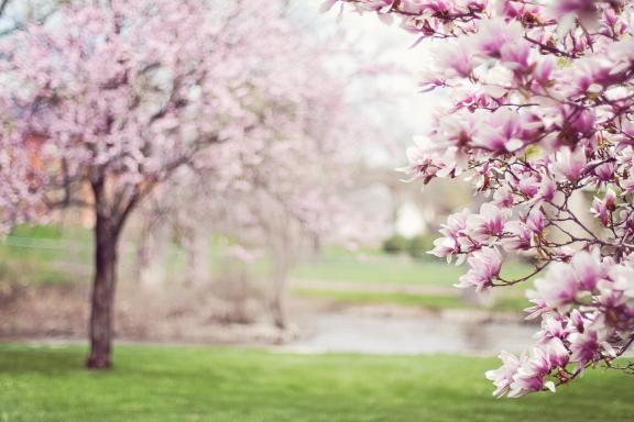 Maar de lente die wist het niet....